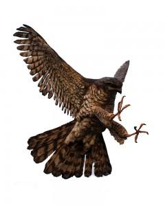 hp-eagle-large